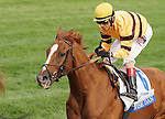 October 04, 2014: Wise Dan and jockey John Velazquez win the Shadwell Turf Mile, Grade 1 $1,000,000 at Keeneland Racecourse.  Candice Chavez/ESW/CSM