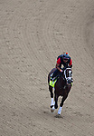 APRIL 30, 2015: Materiality, trained by Todd Pletcher, exercises in preparation for the 141st Kentucky Oaks during morning workouts at Churchill Downs in Louisville, Kentucky. Ting Shen/ESW/Cal Sport Media