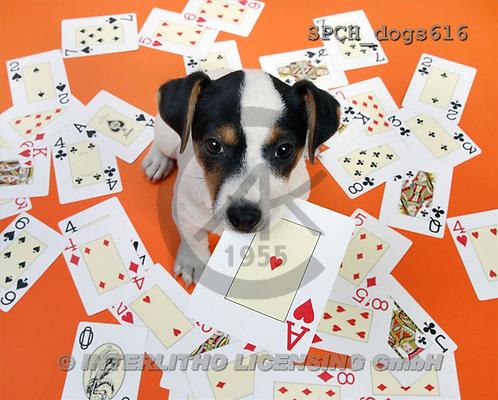 Xavier, ANIMALS, dogs, photos(SPCHdogs616,#A#) Hunde, perros