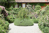 A formal area of the Ca' delle Rose garden with rose bushes planted amongst lavender (Lavandula) and box (Buxus)