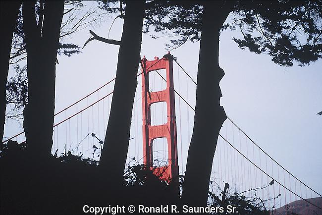 GOLDEN GATE BRIDGE THROUGH TREES (5)