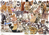 Kim, ANIMALS, REALISTISCHE TIERE, ANIMALES REALISTICOS, fondless, photos+++++,GBJBWP13686,#a# ,puzzles