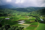 Kauai Island Taro Plantations, Hawaii