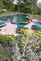 Swimming Pool landscaping garden, with flagstone deck patio, lawn grass, furniture, trees, lambsears Stachys, lavender herb in flower Lavandula, yellow Achillea perennial flowers and plants