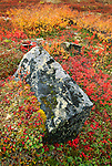 Lichen-covered stone in fall tundra, Denali National Park, Alaska, USA