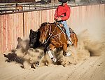 2013 NRCHA Snaffle Bit Futurity Open Champion Cowboy Nick Dowers working one of his horses on the family-Triple D Ranch in Dyer, Nevada
