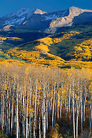 Aspens and East Beckwith Mountain<br />