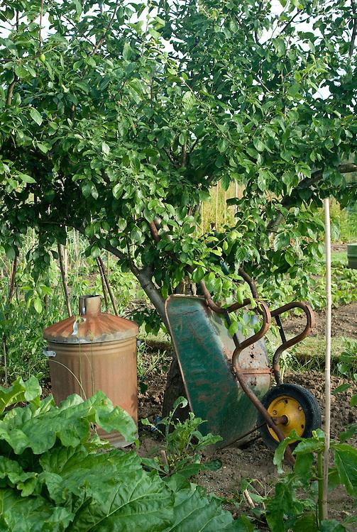 Wheelbarrow and incinearor beneath apple tree, on an alllotment.