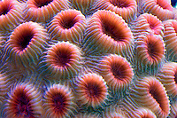 Aquarium corals. Upscales store. Tualitin. Oregon
