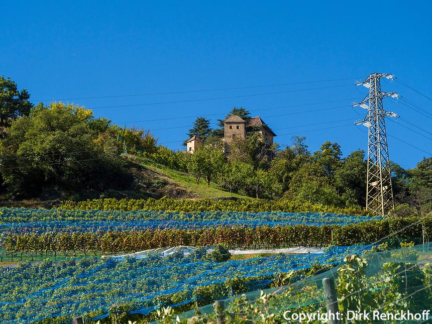 Weinberge bei Schloss Juval, Vinschgau, Region Südtirol-Bozen, Italien, Europa<br /> Vineyards near Reinhold Messner Museum Castle Juval, Hiker near Region South Tyrol-Bolzano, Italy, Europe