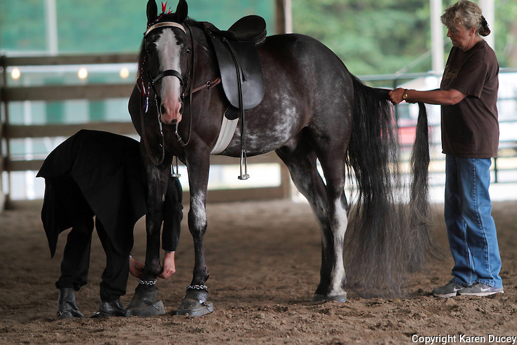 Steve Rich of Carnation, Wash., adjusts the chains around his horse's ankles while Sue Williams, from McCleary, Wash., grooms his tail prior to performing at the at the Northwest Walking Horse Classic in Spanaway, Wash. on July 11, 2015. Cut Me Loose, a 14-year-old Tennessee Walking Horse passed his inspection. (© Karen Ducey Photography)