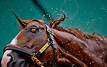 BALTIMORE, MD - MAY 16: Good Magic gets a bath after galloping in preparation for the Preakness at Pimlico Race Course on May 15, 2018 in Baltimore, Maryland (Photo by Scott Serio/Eclipse Sportswire/Getty Images)