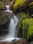 A peaceful cascasde near Sol Duc Falls, Olympic National Park, WA.