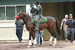 Triple Crown hopeful I'll have Another goes to the track for his daily gallop, lead by Lava Man