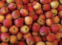 Apples in bin in Hood River Oregon