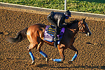 November 4, 2020: Gamine, trained by trainer Bob Baffert, exercises in preparation for the Breeders' Cup Filly & Mare Sprint at Keeneland Racetrack in Lexington, Kentucky on November 4, 2020. John Voorhees/Eclipse Sportswire/Breeders Cup/CSM