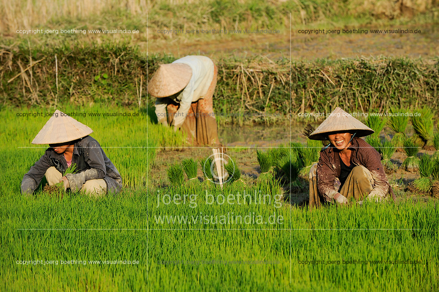 LAOS, Vang Vieng, paddy fields infront of limestone mountains , women replant rice plants