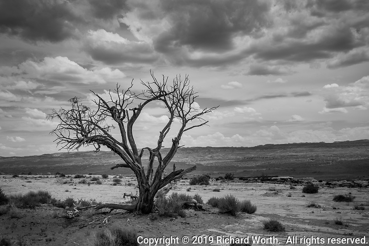 With bare branches, like skeleton fingers, reaching toward the clouds, a dead tree stands a lonely watch in the Utah desert.
