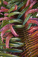 Tropical Hawaiian ferns