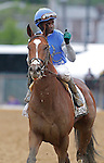 May 18, 2013, Oxbow (#6), Gary Stevens up, wins the 138th Preakness Stakes at Pimlico Race Course in Baltimore, MD. Goldencents and Kevin Krigger return after the gallop out. (Joan Fairman Kanes/Eclipse Sportswire)