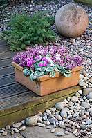 Winter Containers 01