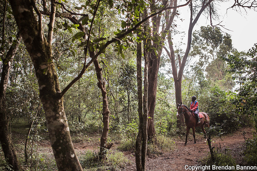 Horses walk and trot in Ngong forest for 45 minutes to warm up prior to doing  speed work on the gallops. Most training is done in the early hours  before the day gets too hot for the horses. Ngong Racecourse, Nairobi, Kenya. March 13, 2013. Photo: Brendan Bannon