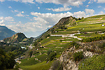 Switzerland, Canton Valais, Sion: wine growing in Rhône Valley | Schweiz, Kanton Wallis, Sion (Sitten): Weinanbau im Rhonetal