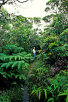 Woman hiking with the Nature Conservancy at Kamakou reserve in native Hawaiian rainforest on Molokai