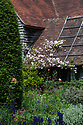 Clipped yew column and climbing rose trained on wooden battens attached to tiled roof of The Barn in Old Garden, Vann House, Surrey, mid June.