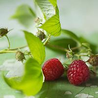 Gastronomie, Framboises   // Gastronomy, Raspberry