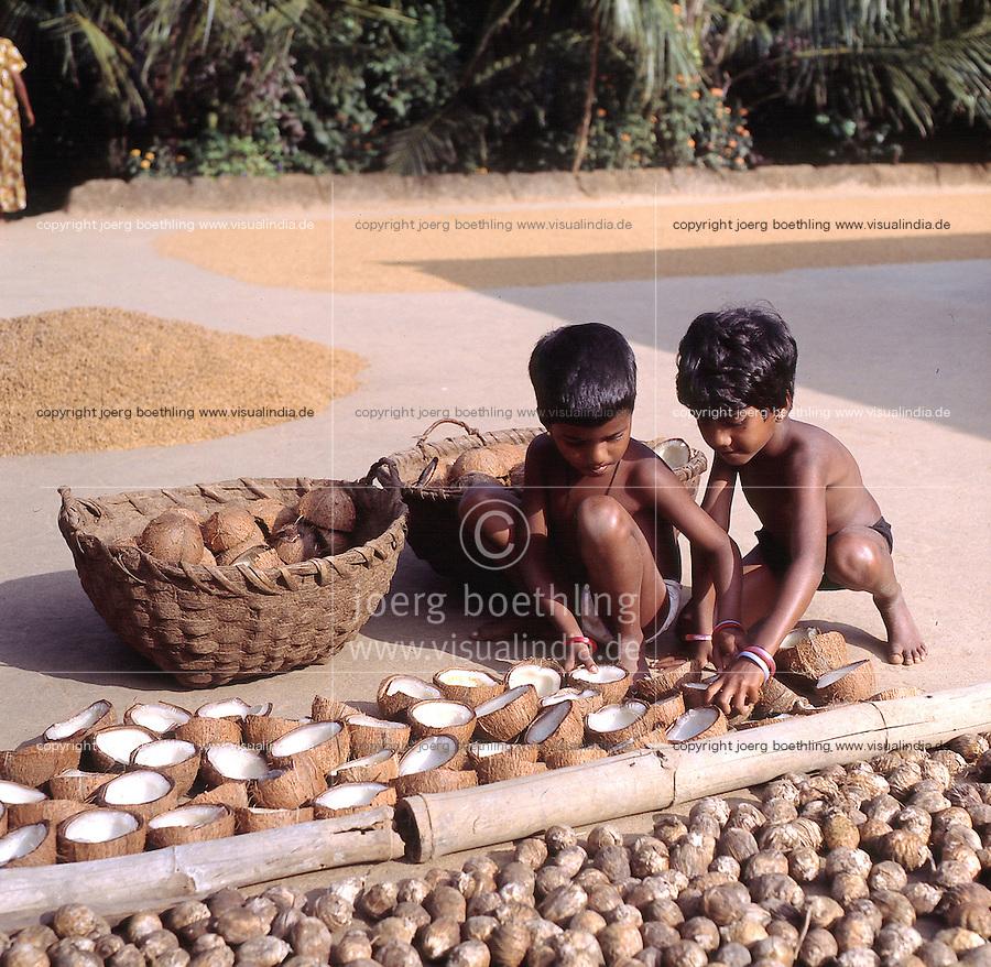 INDIA Karnataka, twin sister dry coconut at farm in village Taccode, infront also drying Betel nuts or Areka nut, Areca catechu, coprah, dried meat of coconut kernel which is used to press edible oil  / INDIEN, Zwillinge, trocknen Kokosnuesse auf einer Farm bei Taccode, aus dem getrockneten Fruchtfleisch wird spaeter in einer Oelmuehle Kokosoel gepresst, vorne Betelnuss