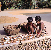 INDIA Karnataka, twin sister dry coconut at farm in village Taccode, infront also drying Betel nuts or Areka nut, Areca catechu, coprah, dried meat of coconut kernel which is used to press edible oil  / INDIEN, Zwillinge, trocknen Kokosnuesse auf einer Farm bei Taccode, aus dem getrockneten Fruchtfleisch wird spaeter in einer Oelmuehle Kokosoel gepresst, vorne Betelnuss