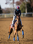 Invincible Gal, trained by H. Graham Motion, exercises in preparation for the Breeders' Cup Juvenile Fillies Turf at Keeneland 11.03.20.