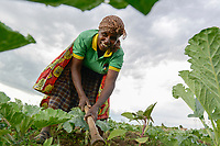 TANZANIA, Tarime District, village Kewamaba, woman farmer weeding vegetable field with pick axe / TANSANIA, Frau Flora Ryoba, 48,  im Dorf Kewamaba, Jaeten mit Hacke im Gemuesefeld der Frauengruppe   - Nutzung nur fuer redaktionelle Zwecke, Kein PR !