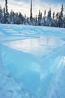 Large blocks of ice from a Fairbanks pond. Blocks, cut by chainsaws are used by sculptors in the World Ice Art Championships held each march in Fairbanks, Alaska