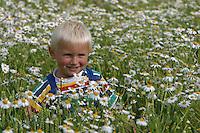 Junge, Kind in Kamillenfeld, Geruchslose Kamille, Blumenpflücken, Tripleurospermum perforatum, Tripleurospermum inodorum, Matricaria inodora, Scentless False Chamomile