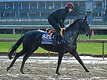 November 1, 2018 : Van Beethoven, trained by Aidan O'Brien, trains for the Breeders' Cup Juvenile Turf Sprint at Churchill Downs on November 1, 2018 in Louisville, KY. Jessica Morgan/ESW/CSM