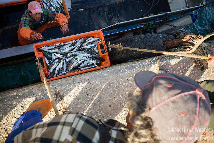 Fishermen unload a boat after a morning of fishing near Sagres, the Algarve region of Portugal.