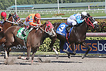HALLANDALE BEACH, FL - JANUARY 21:  #3 Mia Torri (FL) with jockey Javier Castellano on board, wins the Sunshine Millions Distaff at Gulfstream Park on January 21, 2017 in Hallandale Beach, Florida. (Photo by Liz Lamont/Eclipse Sportswire/Getty Images)