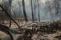 A thick layer of ash covers the ground after fire swept through forestland on the Santa Tereza farm in the Pantanal of Mato Grosso do Sul. Since the beginning of 2020, the Pantanal has been facing the largest destruction by burning in its history. From January to September, the fires swept 3,977,000 hectares of fauna and flora, which corresponds to 26.5% of the entire biome.