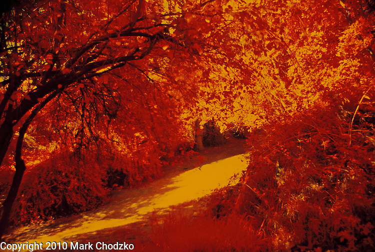 Infrared film photograph of a park.