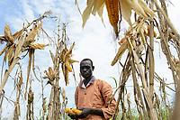 ETHIOPIA, Gambela, village Gog-Dipach, Anuak tribe, small scale farmer harvest maize  / AETHIOPIEN, Gambela, Dorf GOG DIPACH der Ethnie ANUAK, Maisernte bei Kleinbauer Mark Ojulu (Name geaendert), er wurde durch eine lokale NGO mit Unterstuetzung durch eine deutsche Hilfsorganisation bei neuen Anbaumethoden geschult und hat verbessertes lokales Saatgut erhalten, um seine Erträge zu steigern, seine Felder liegen heute eine Stunde Fussmarsch vom Dorf entfernt, da die einzelnen zerstreuten Gehoefte der Kleinbauern durch das staatliche villagization Programm zum heutigen Dorf Gog-Dipach zusammengelegt wurden, um Landflaechen an Investoren fuer industrielle Landwirtschaft zu verpachten