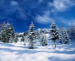 Germany, Bavaria, Upper Bavaria, Werdenfelser Land: Winter scenery near Kruen   Deutschland, Bayern, Oberbayern, Werdenfelser Land: Winterlandschaft bei Kruen