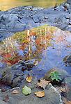 Reflection in stream, Grandfather Mountain, North Carolina