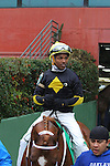 February 22, 2015: #5 Bold Conquest with jockey Ricardo Santana, Jr. aboard coming from the paddock area at Oaklawn Park in Hot Springs, AR. Justin Manning/ESW/CSM