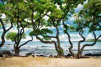 Heliotrope trees and surf on Kikaua Beach. Hawaii, The Big Island.