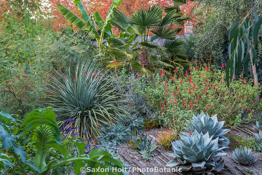 Foliage textures with Nolina, Agave, Salvia, Palm, Musa in Kuzma Garden. photo MUST be credited as Design by Sean Hogan.