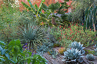 Foliage textures with Nolina, Agave, Salvia, Palm, Musa in Kuzma Garden