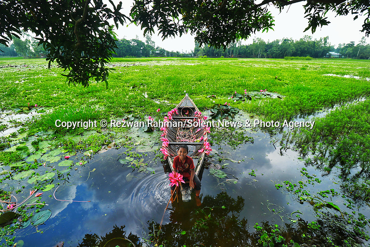 Pictured: Dhananjaya, 10 plays with water lillies as the group of young boys harvest them by boat on a lake in Kalir Bazar, Bangladesh.<br /> <br /> A young boy playfully raises two water lilies in the air and sprays water in the shape of a heart.   The nine year old, Krishna, is part of a group of boys helping his older brother collect the vibrant pink flowers.<br /> <br /> His brother Atik, 20, sailed him and the others to pick the lilies which they will later sell at a local market.   The photographs were taken by Rezwan Rahman, on a lake in Kalir Bazar, Bangladesh.   SEE OUR COPY <br /> <br /> Please byline: Rezwan Rahman/Solent News<br /> <br /> © Reezwan Rahman/Solent News & Photo Agency<br /> UK +44 (0) 2380 458800
