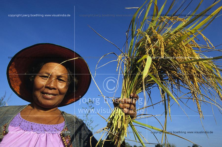 THAILAND, Ubon Ratchathani, fair trade and organic farmer project, PFA Progressive Farmer Association, women harvest organic Jasmine fragrant rice / THAILAND, fairtrade und Bio Projekt, PFA Progressive Farmer Association, Frauen ernten Jasmin Duftreis